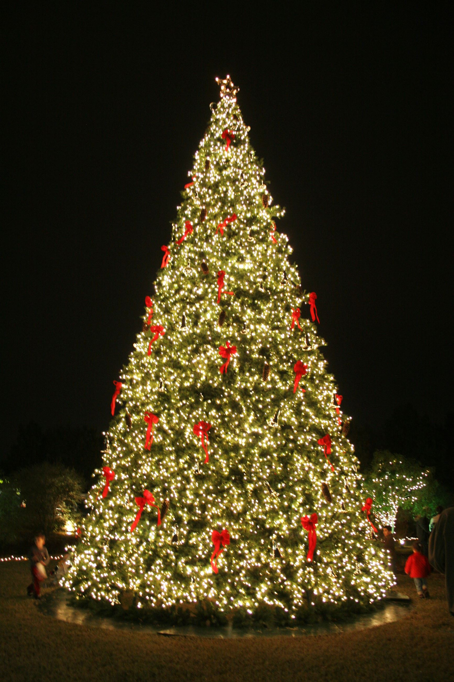 Christmas Tree Lighting.Allen Special Events Tx